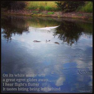 Ardea alba poem (on image of a great egret flying away)